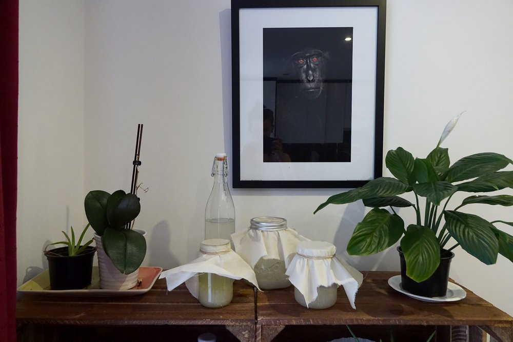 My little water kefir fermentation corner