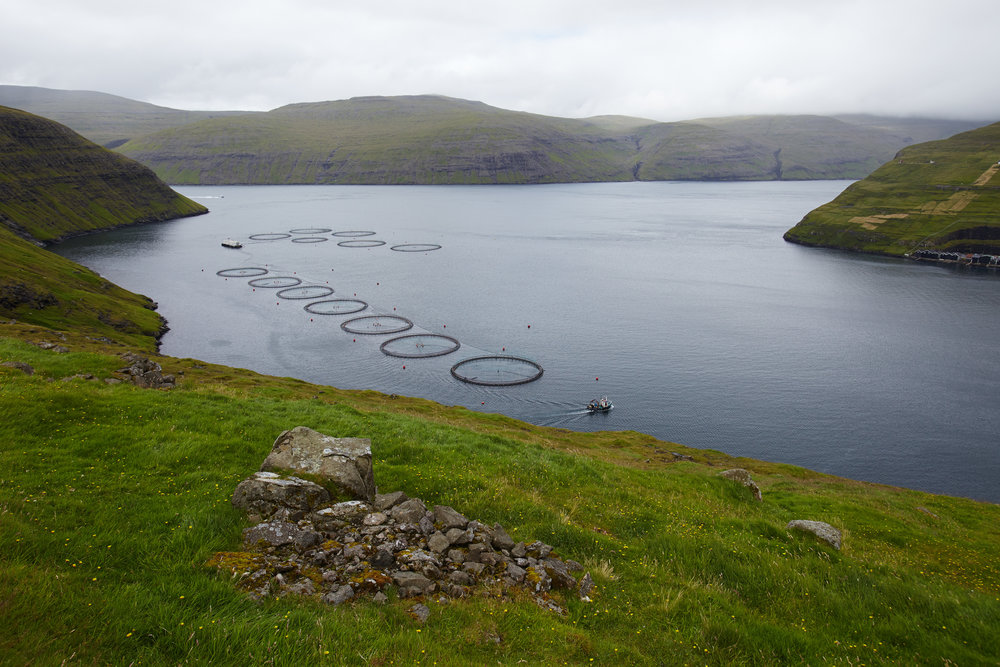 Salmon farming in the Faroe Islands - Can it work togethe with aquaponics?