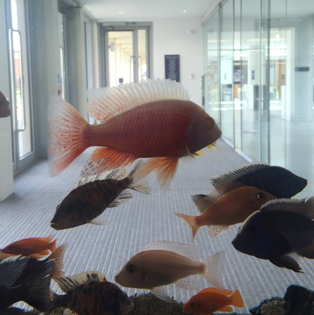 Aquarium at the Science-Department at Uppingham School