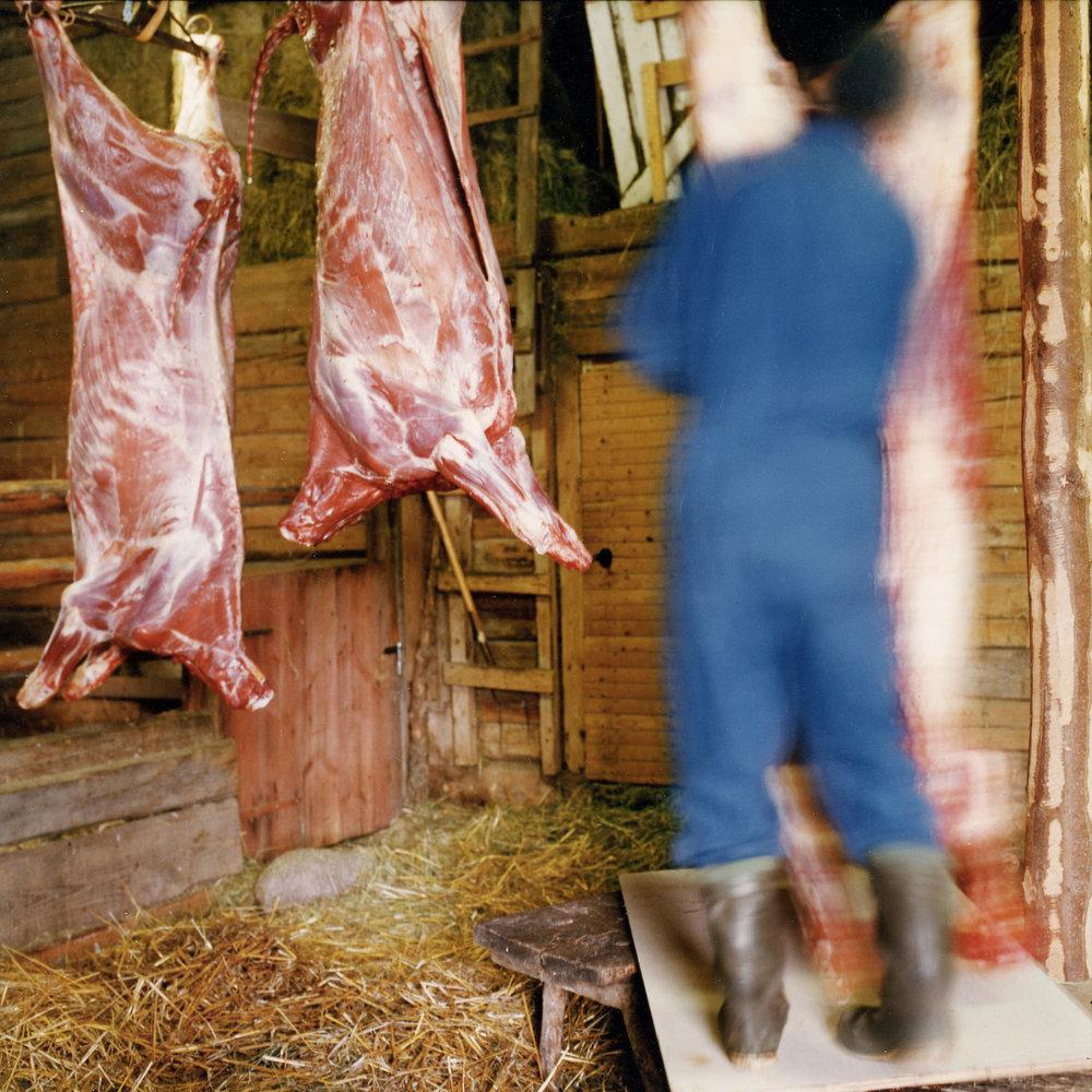 Abattage à la ferme en Suède