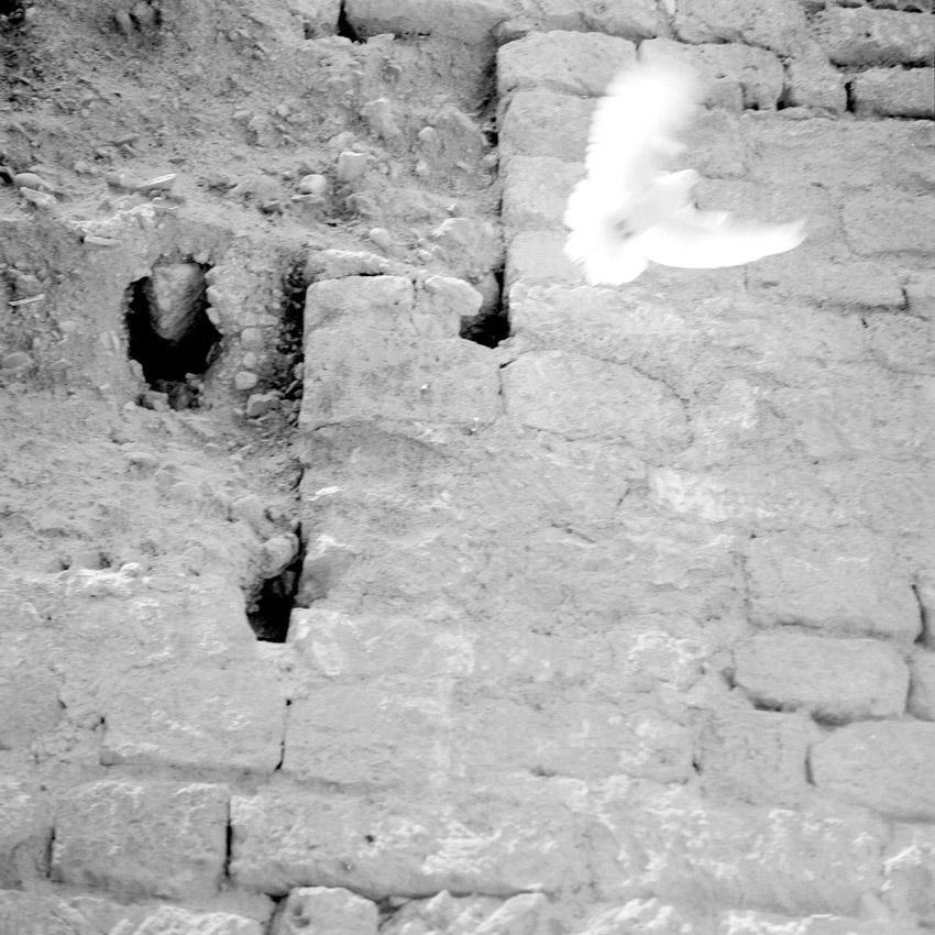 Envol d'une tourterelle sous le pont romain de Cordoue