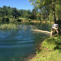 Maintaining a pond and removing unwanted tree