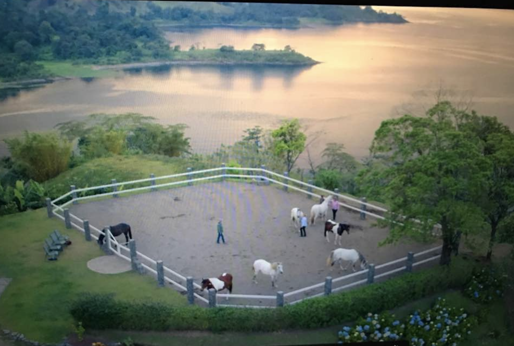 Beauty surrounds us,  amidst the Tropical Rainforest, at Dances With Horses, Costa Rica location
