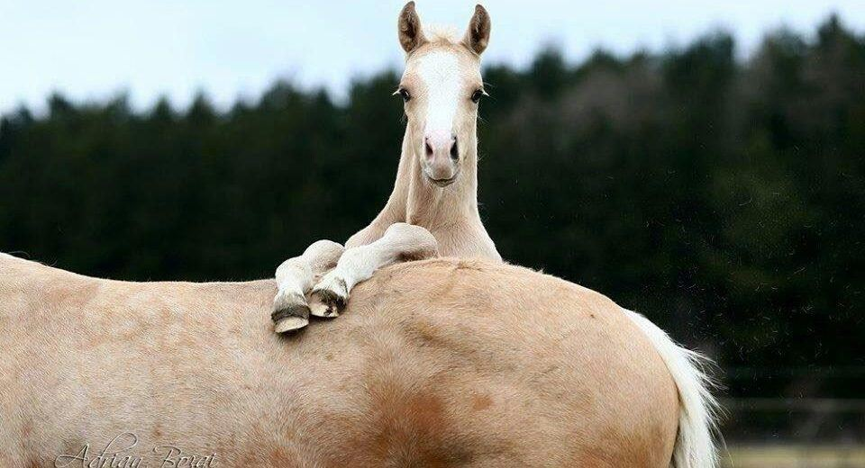 carolyn-resnick-foal.png