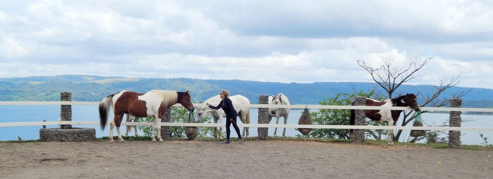 Nancy Zintsmaster builds Trust with a Horse
