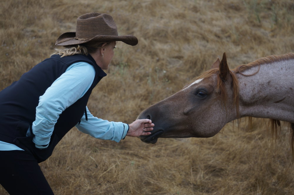 Nancy Zintsmaster at a clinic at Return to Freedom Wild Horse Sanctuary