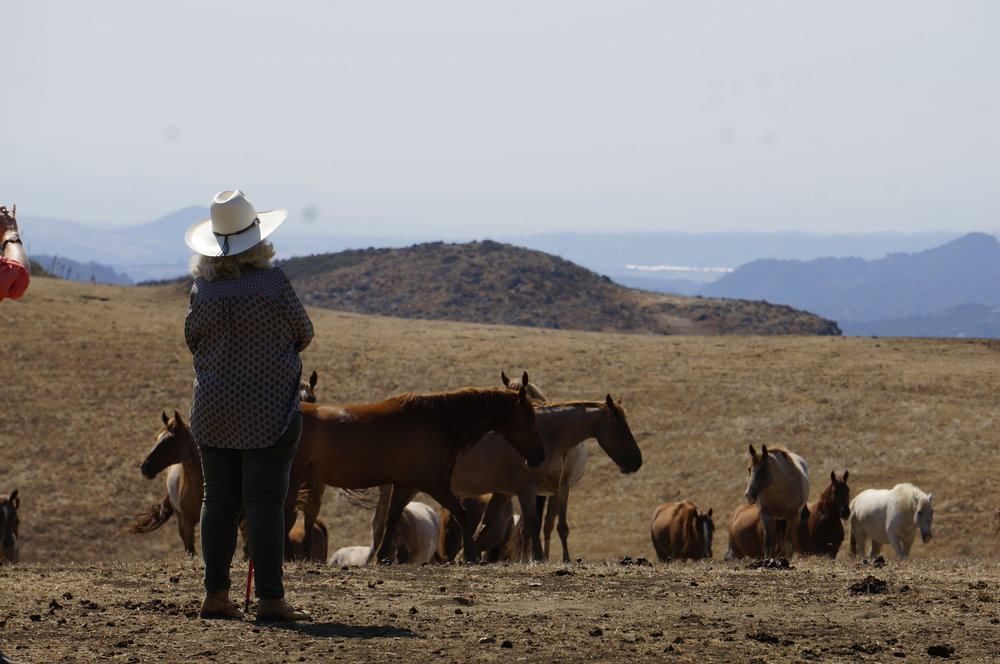 Carolyn Resnick at Return To Freedom Wild Horse Sanctuary