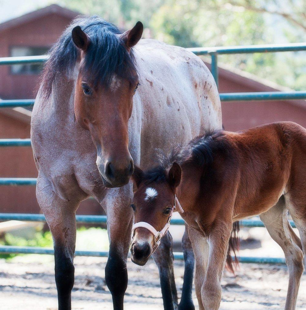 Ari and Foal .jpg