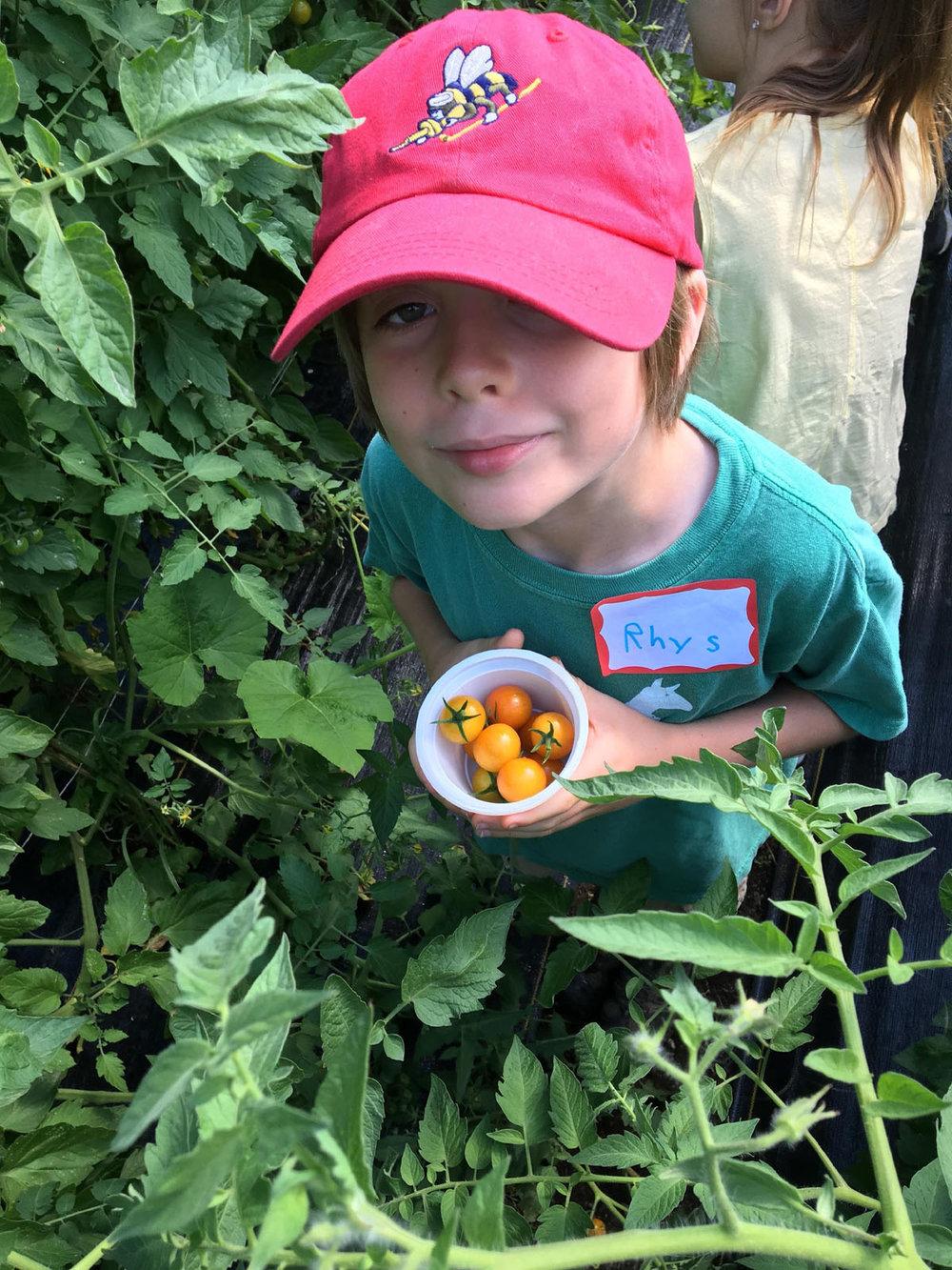 boy tomatoes2.jpg