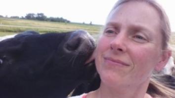 A little bovine love