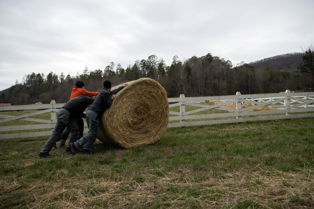 Participants pausing for a breath during a hay-rolling challenge