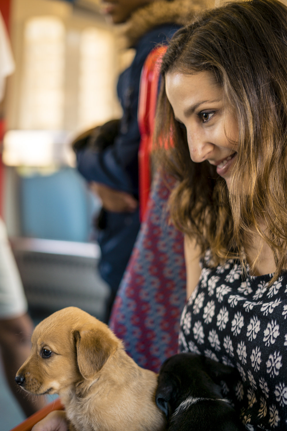 You get free puppies when you ride the train