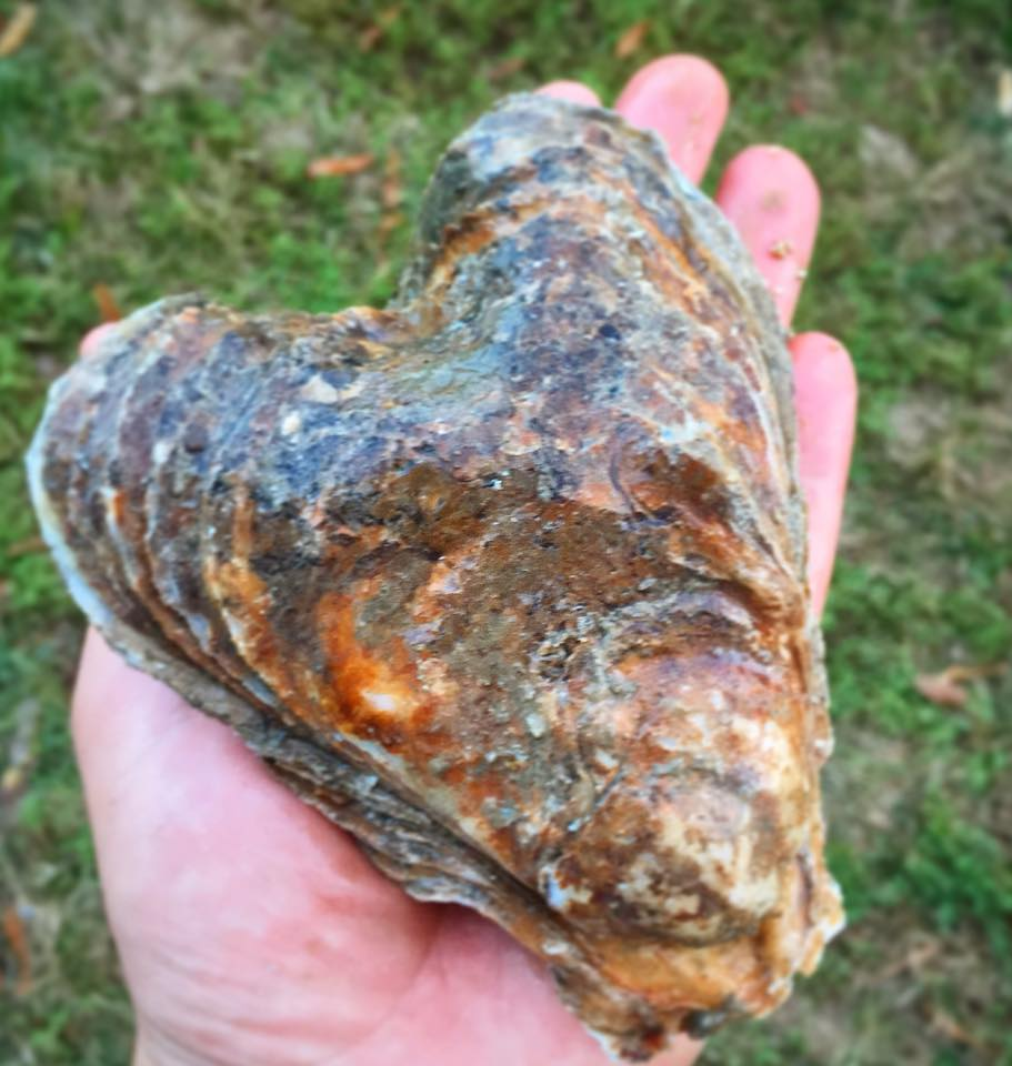 Heart-Shaped Oyster. Photo from Byrd's Seafood in Irvington, VA.