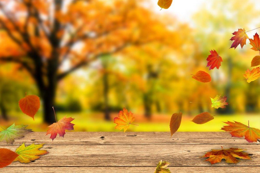 Sommer adé , Herbst juchee!