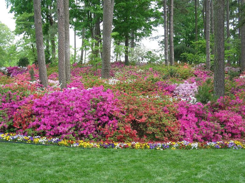 WRAL Gardens_1018.jpg