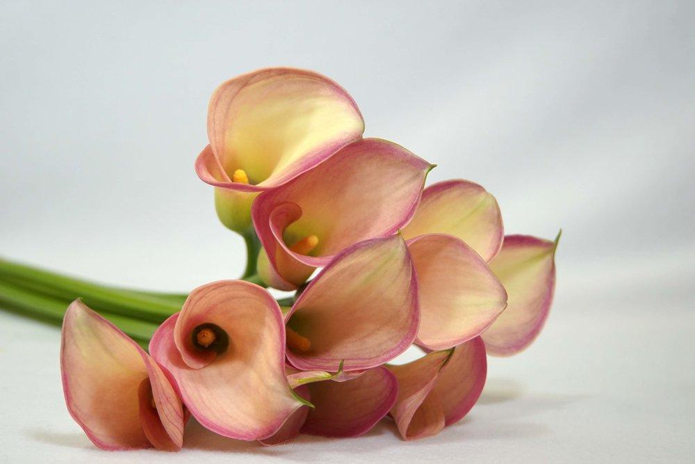Mini Cala Lily