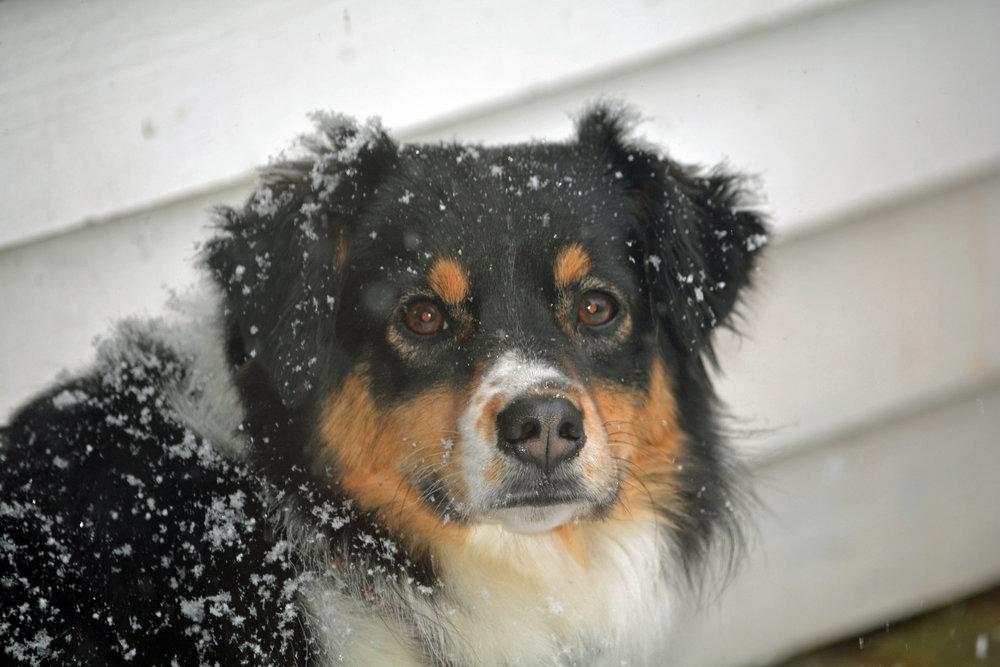 Wrigley - Snowy.jpg