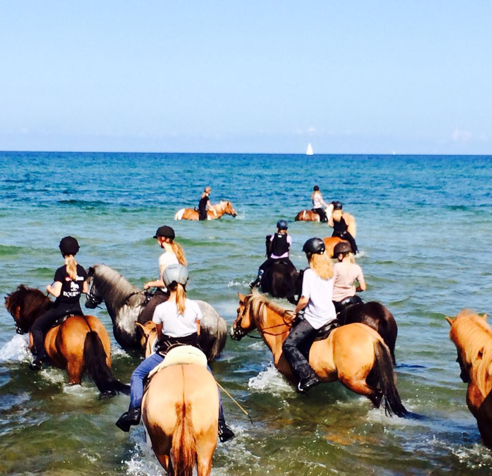 Vi bader heste