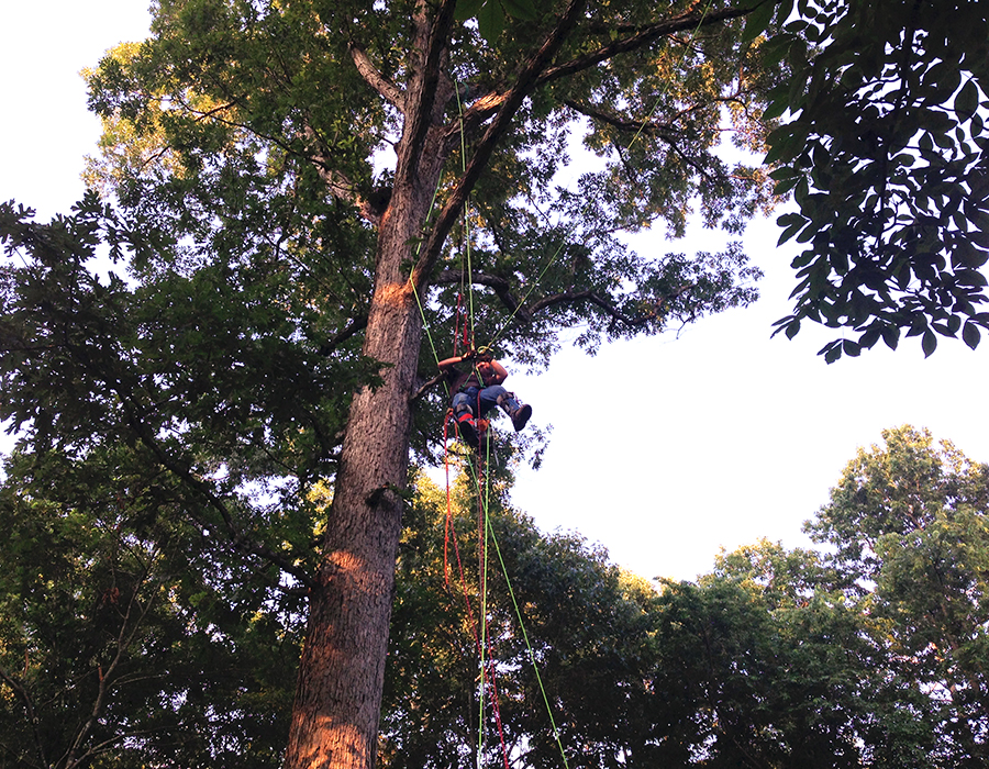 LImbwalkers Tree & Crane Service employs a team of fully-insured tree care professionals.