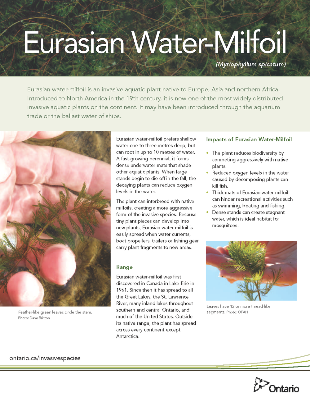 Eurasian_water_milfoil_fact_sheet_web_Page_1.png