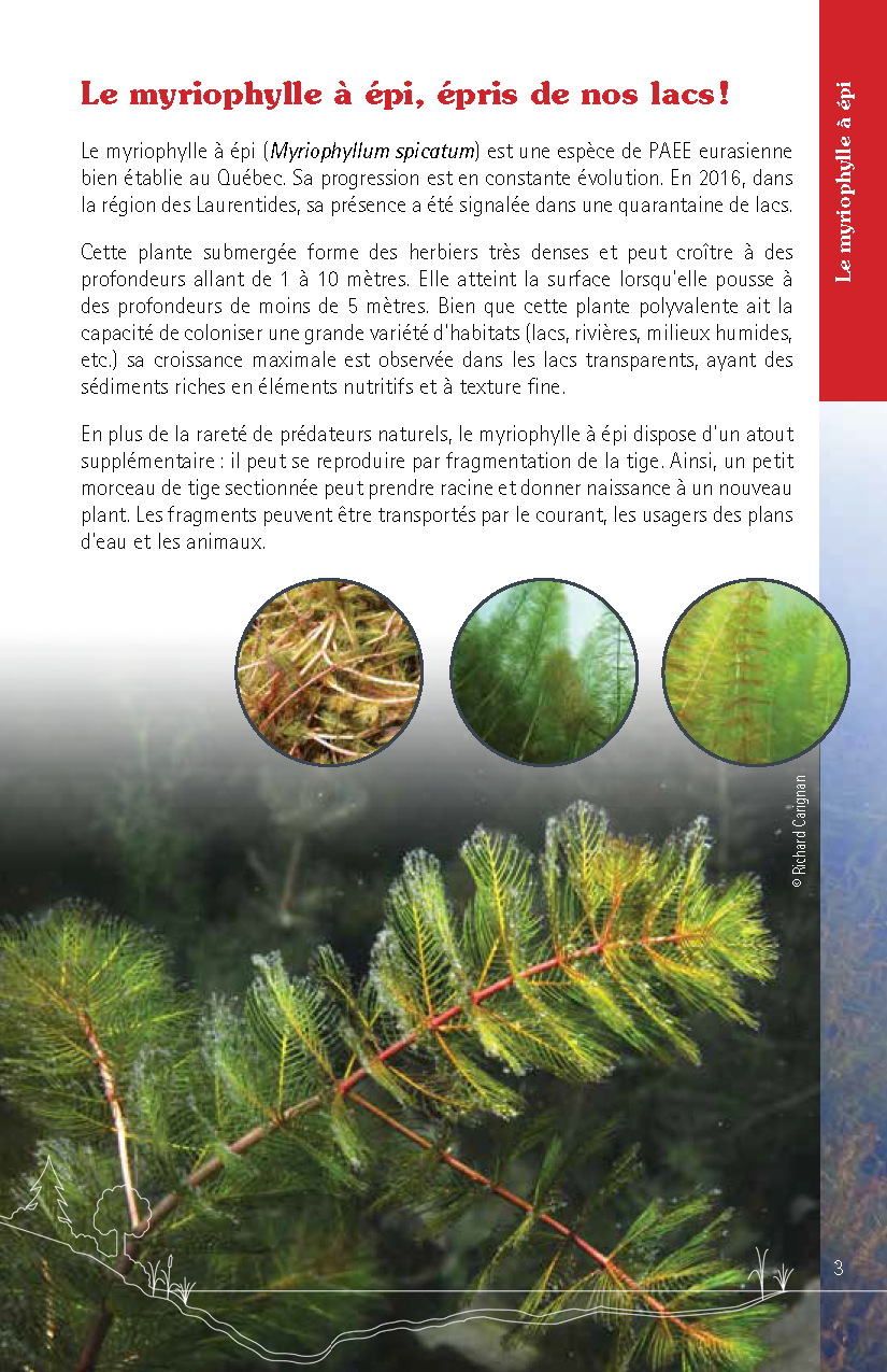 Guide_Myriophylle_FR_Page_03.png