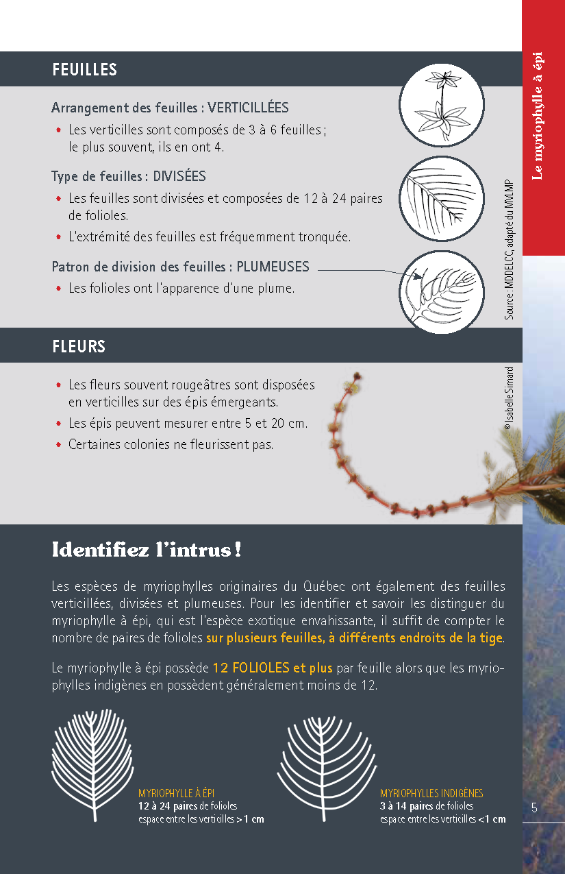 Guide_Myriophylle_FR_Page_05.png