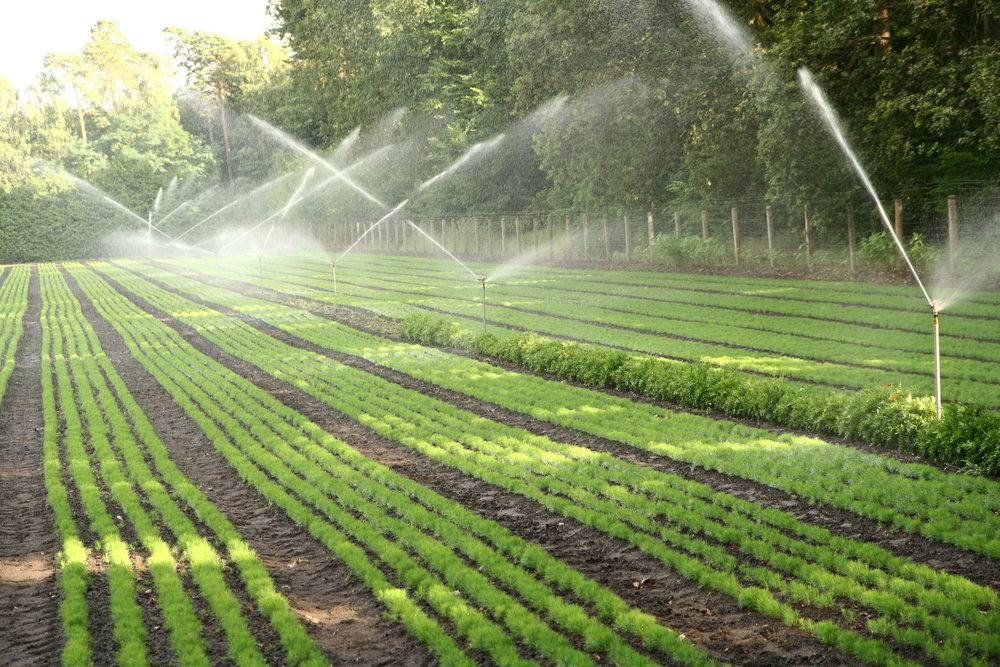 Nursery Irrigation.jpg