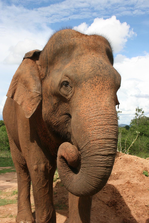 Elephant 07.JPG