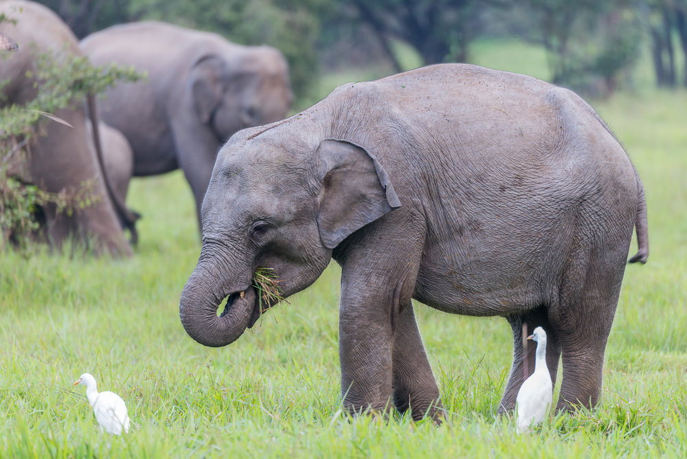 Elephant Herd 05.jpg