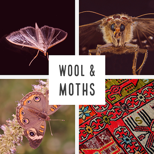 Moths and Wool spark sm.jpg