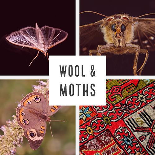 Moths and Wool spark sm.jpg