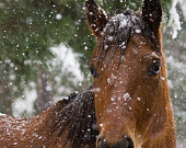 Horse Photography Horse in Snow
