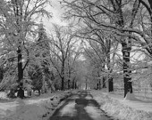 Black White Wall Art Photography/Winter/Snowy Road Landscape/Home Decor Matted Picture