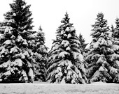 Travel Photography - Winter Wonderland - Landscape, Nature, Trees, Park City, Utah, Snow, Black and White, Etsy Art, Fine Art Photography