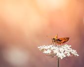 Butterfly Photography: Orange butterfly photograph, spring decor, woodland nursery, nature photography, boho fotografia