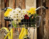 Summer Bike Photography, Bike Basket Full of Flowers, Yellow, White, Country Chic,