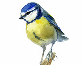 Blue Bird print, watercolor bird, Blue Tit Bird, Cyanistes caeruleus, Chickadee family