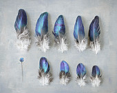Blue and Gray Photograph, Bird Feather Picture, Feather Collection, Blue Nature Photography, Gray Still Life Photo
