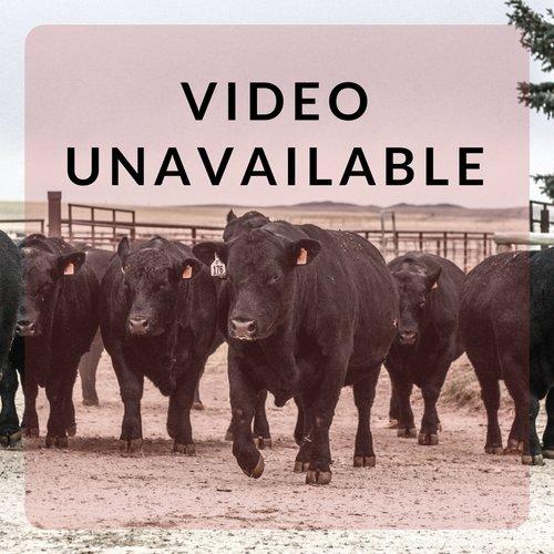 Sitz Video Unavailable.jpeg