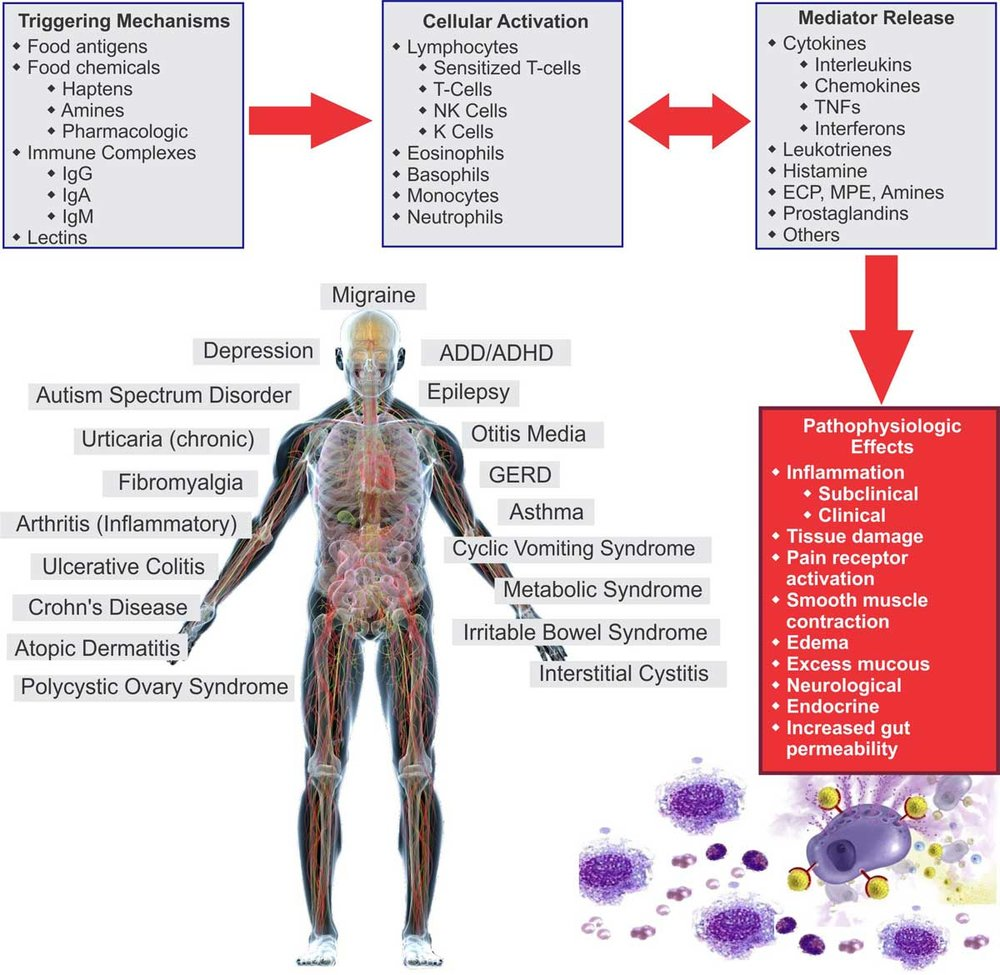 How-Food-Sensitivities-Cause-Inflammation-Chart.jpg