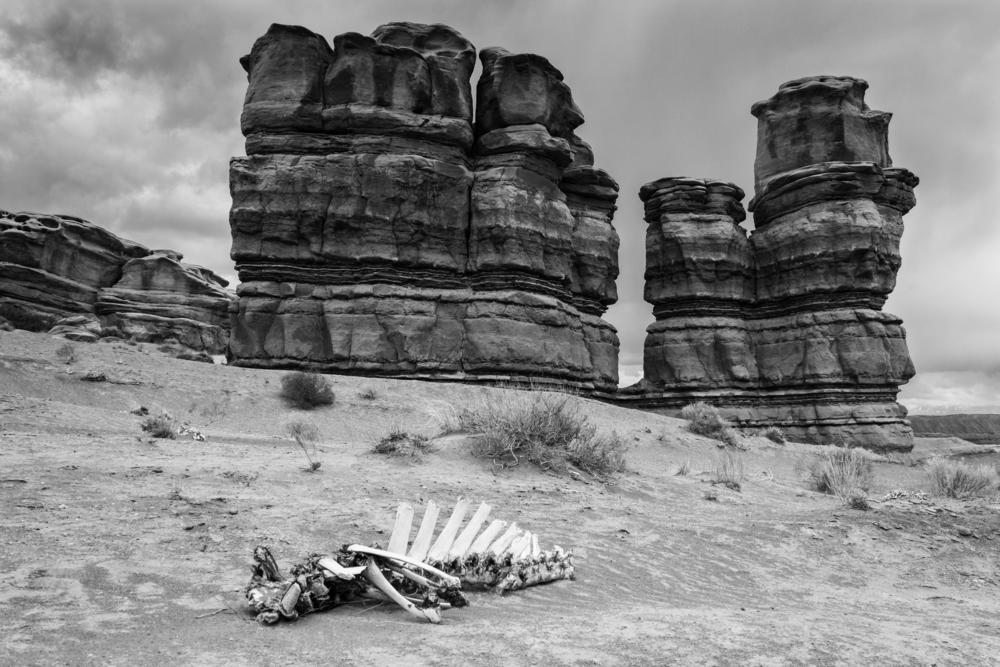 Cow Carcass in Capitol Reef - ©️ Nicole Atkins