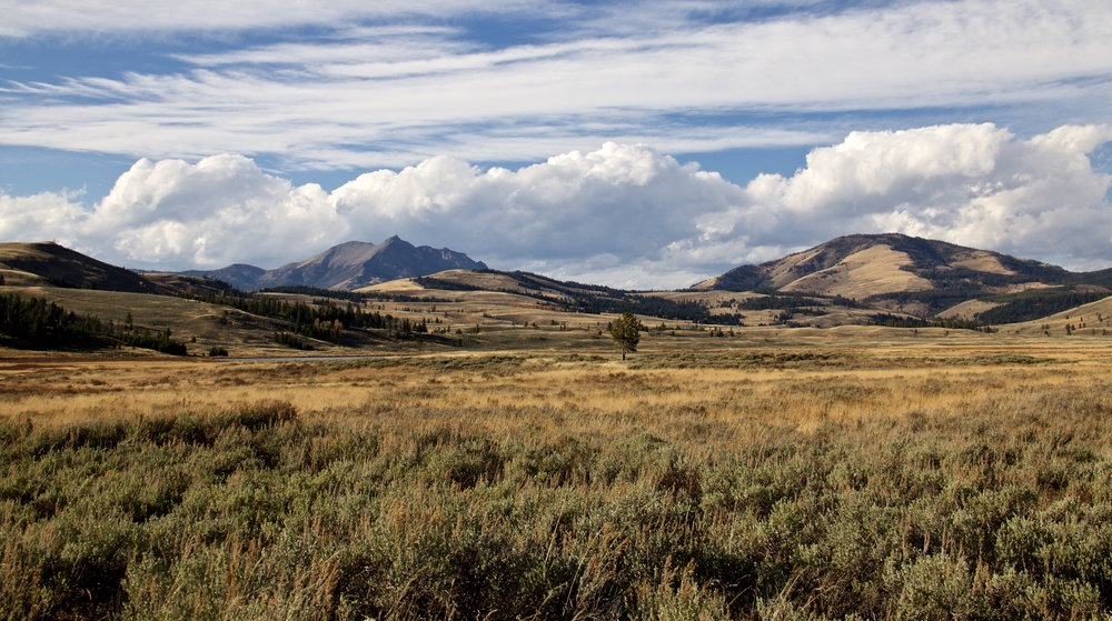 Madison Valley in Yellowstone - ©️ Nicole Atkins