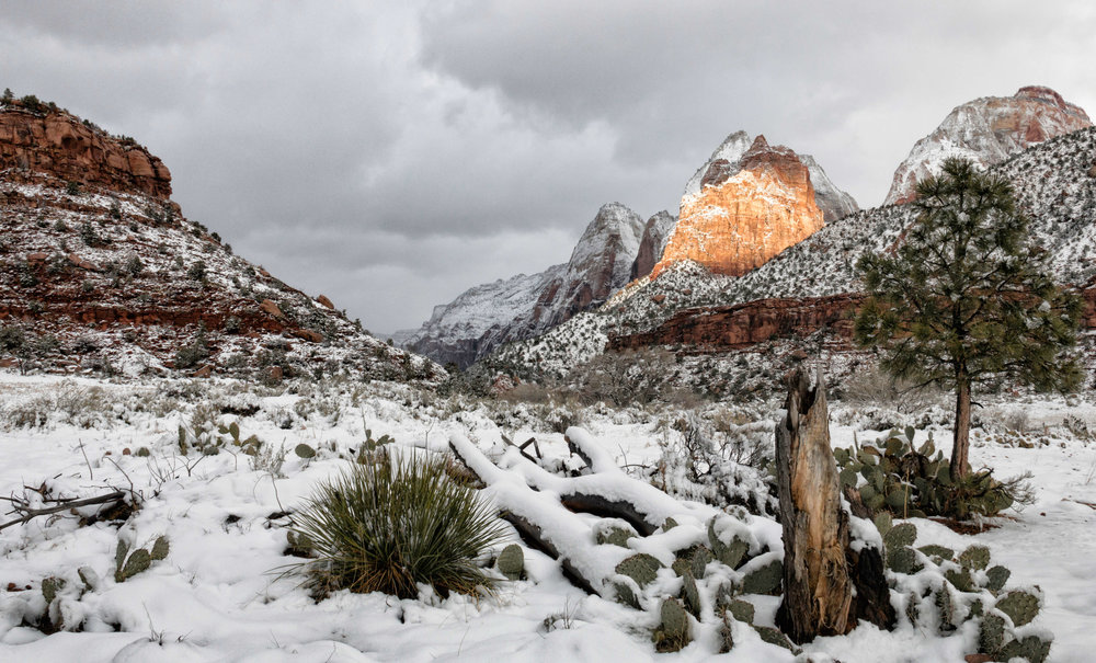 Snow Covering Zion's Valley Floor - ©️ Nicole Atkins