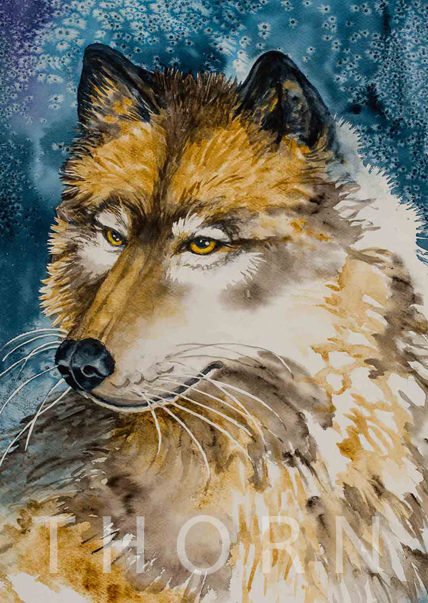 HUSKY    Click on image for size and material options.   Prints Available from $36 - $340  Authentic Watercolor on Archival Paper  Original Art For Sale $940  2002  Artist: Karen Thornberg