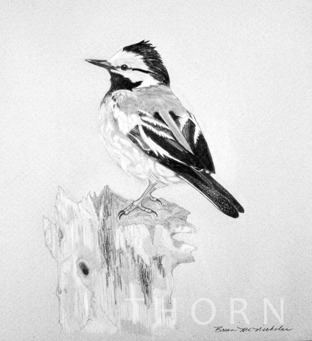 """BIRD ON STUMP    Click on image for size and material options.   Prints Available From $27 - $310  Original 10""""w x 12""""h  Artist: Brian McNicholas"""