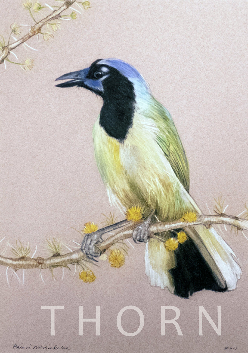 """GREEN JAY    Click on image for size and material options.   Prints Available From $54 - $340  Original 10""""w x 15""""h  Artist: Brian McNicholas"""