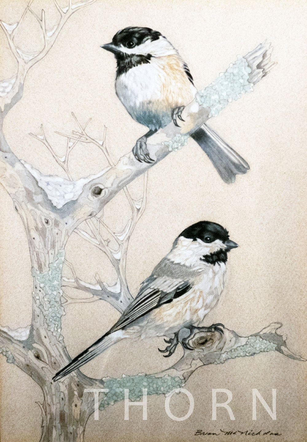"""TWO BIRDS ON BRANCH    Click on image for size and material options.   Prints Available From $54 - $340  Original 12""""w x 18""""h  Artist: Brian McNicholas"""