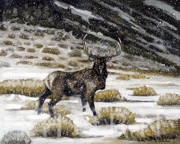 """ELK IN A SNOW STORM    Click on image for size and material options.   Prints Available From $27 - $340  Oil  Original 20""""w x 16 """"h  Artist: Brian McNicholas"""