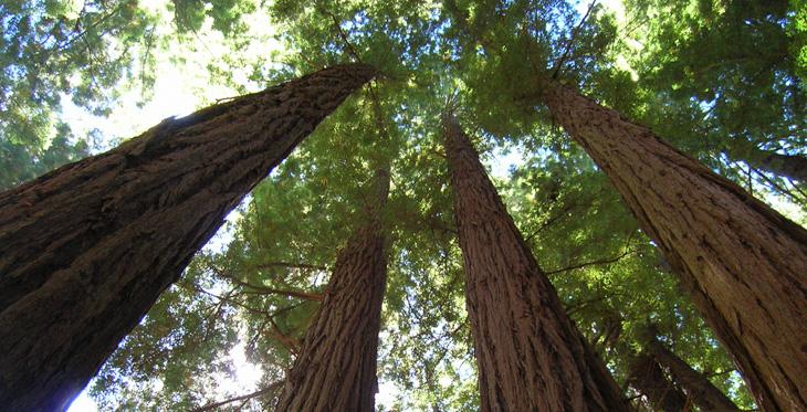 Redwood Leadership Model
