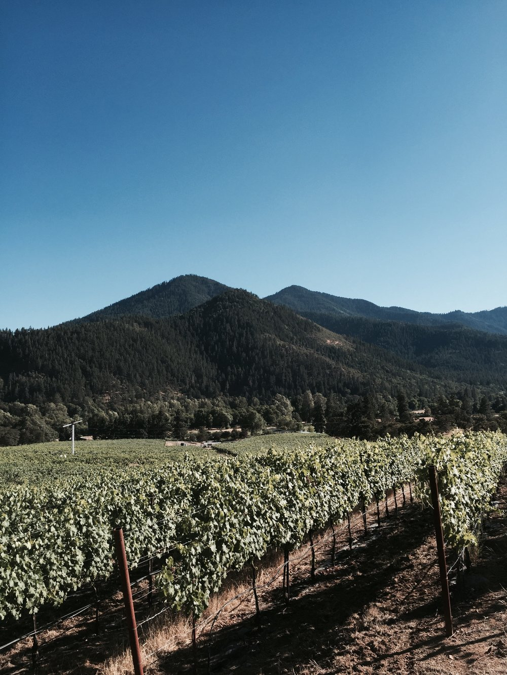 Photo of Mae's Vineyard